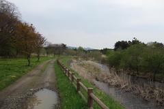 A wild promenade (しまむー) Tags: sony cybershot dscrx100 carl zeiss variosonnar t 104371mm 28100mm f1849 菜の花 横浜町 yokohama town