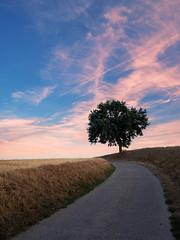 The Way (Blueocean64) Tags: belgium belgique wallonie hainaut coucherdesoleil sunset nuages clouds sky ciel perspective street nature arbres tree extérieur outdoor light summer samyang 12mm panasonic g5 explorer 美丽 艺术 摄影 欧洲 旅游 景观