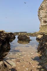 Flamborough rock pools 1 (Jo Rawson!) Tags: yorkshirecoast yorkshire seaside sea coast rockpools