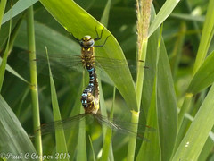 DSCF4402 (Paul C Cooper) Tags: fields nature water hay crops fish dragonfly refection green farm