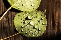 Aftermath (San Francisco Gal) Tags: aspen leaf raindrop wood droplet macro shadow