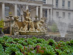 Succulents (Stephen John Drury) Tags: neptunefountain promenade cheltenham fountain greek greekgod chariot seahorses conch trident succulents blurrybackground