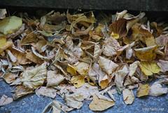Київ, Маріїнський парк. Скоро осінь.