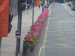 Broad Street, Birmingham - pink flowers (ell brown) Tags: broadst birmingham westmidlands england unitedkingdom greatbritain bus 23 nxwm nationalexpresswestmidlands nationalexpresswestmidlandsplatinum flower flowers trafficlight trafficlights westmidlandsmetroextensiontofiveways westmidlandsmetro midlandmetroalliance roadworks