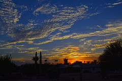 Aretha Franklin (oybay©) Tags: arizona sunset monsoon cloudy clouds saguaro cactus silhouette color colors nature natural orange yellow red purple outdoor sky dusk cloud