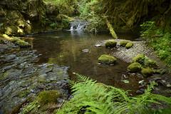 Goodman Creek (heinrick oldhauser) Tags: oregon lanecounty waterfall creek ferns moss summer green pool rainforest