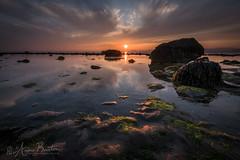 Tranquility (xxKnuckles) Tags: gwynedd shellisland uk wales beach plant rocks sea seaweed shore sunset vegetation