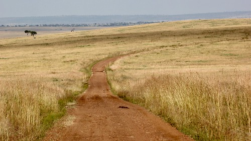 Road to the Serengeti