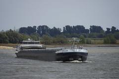 Motorvrachtschip CYLOR Nieuwpoort CYLOR (06004139) op de Rijn bij Rees 18-08-2018 (marcelwijers) Tags: motorvrachtschip cylor nieuwpoort 06004139 op de rijn bij rees 18082018 schip ship boat schepen binnenvaart