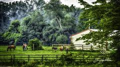 Horses on farm (jsleighton) Tags: horse farm field fence barn trees landscape