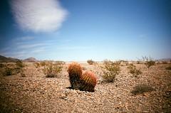 cactus. (howard-f) Tags: nikon nikon28ti nikonti expiredfilm expiredfujisuperia analog filmcamera 35mmfilm 28mm filmphotography mundane vegas nevada desert cactus dry mojavedesert