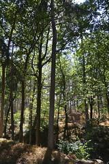 warm bos_D710213 (Vogelmelk) Tags: droogte nederland netherlands veluwe bos reeenberg