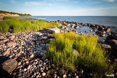 Rügener Küste (florianpluecker) Tags: ruegen insel deutschland germany strand beach steilkueste kies sonnenaufgang morgen dawn ostsee eastsea