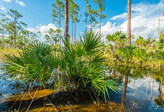 Big Cypress (J.Coffman Photography) Tags: big cypress everglades national park landscape trees swamp water reflections florida united states forest marsh clouds nikon d810 hike hiking wilderness sunshine fl state preserve wet season