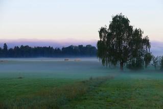 Morgennebel über dem Trimstemoos