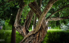 e-lias-306 (e-lias hun) Tags: tree color greeen park nikond7000 50mm