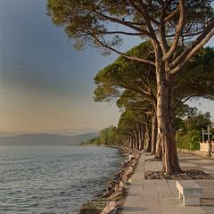 Promenade's Trees (Luca Enrico Photography) Tags: lagodigarda lazise sunset tramonto passeggiata lake d750 nikon promenade