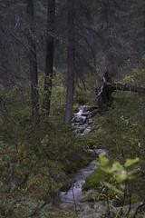 into the wild (zawaski) Tags: canada alberta ambientlight noflash zawaski©2015 calgary beautiful canonefs18200mmf3556is