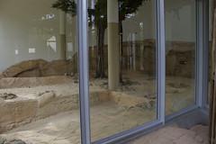 Lion enclosure - Indoors (kevinvarzoos) Tags: rotterdam zoo diergaarde blijdorp lion exhibit