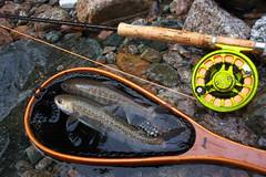 DSC_4600 (touhenboku) Tags: fly fishing flyfishing iwana イワナ