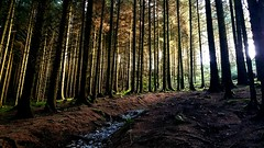 Stavely woods - Clara #outdoor (citruslime24) Tags: outdoor potential