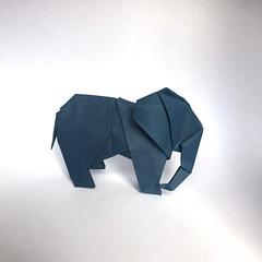 Origami Elephant (Orimin) Tags: origami art paper papercraft craft handmade animal mammal elephant trunk ears africa grey dark blue big mindaugas cesnavicius
