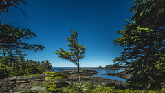 Tofino (Photo Alan) Tags: tree trees sky landscape tofino bc canada water sea park forest woods grass