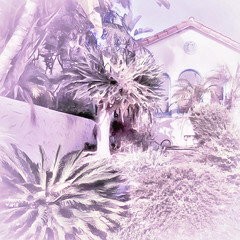 < The sensuous hot days of summer > (Wandering Dom) Tags: house garden plants nature people usa southerncalifornia earth multiverse existence being nothingness heatwave keepincool sensuous days summer roam wandering impression expression