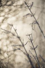 Brins givrés (Titole) Tags: frost titole nicolefaton monochrome monotone