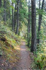 2018-08-18 Whistle Lake Trail 205 (18) (680x1024) (-jon) Tags: anacortes skagitcounty skagit fidalgoisland sanjuanislands washingtonstate washington pnw pacificnorthwest salishsea pugetsound acfl anacortescommunityforestlands whistlelake lake trail path 205 nikon nikonl22 tree douglasfir fern alder summer woods forest a266122photographyproduction hiking hike walk walking