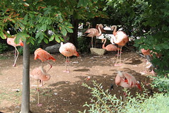 IMG_6724 (bronsonwo) Tags: indianapolis zoo