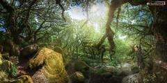 Circles of moss (dieLeuchtturms) Tags: devon dartmoor england europa 2x1 panorama wald grosbritannien wistmanswood europe greatbritain forest princetown vereinigteskönigreich gb