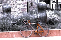 Cannondale! (a2roland) Tags: normanzeba2rolandyahoocom normanzeba2rolandyahoocoma2roland cannondale bicycle bycycle art orange black white bw monotone sepia colorless spot color tires wheels brakes building structure bokeh focus clear blur bushes stree pavement ride transportation