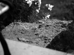 rainy rock (1) (Ange 29) Tags: rain rock bw olympus omd em1 35100mm zd king township canada