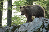 _W1G9000 (Outlander Photo) Tags: kozarišče cerknica slovenia si