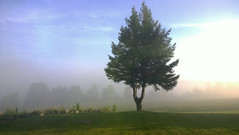 lord of the mist (Ange 29) Tags: trees mist early morning sunlight lawn rocks nokia lumia 1020 king township canada