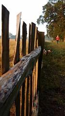 Divided (Worcestershire UK) Tags: walkies dog jackrussellterrier jrt schnoobe charlottebrown hanbury earlymorning earlydoors thegoldenhour suns