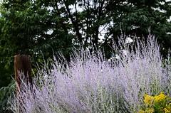 Roadside herbs (nousku) Tags: newmexico santafe tamron citystreetpark nature