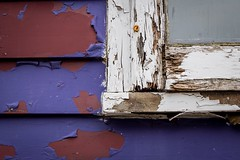 Battered and Bruised ... (vanessa violet) Tags: purplepassion colourfusion batteredandbruised bruised decay window paint siding home house