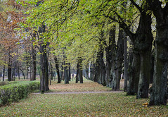 Autumn scenery of Saint Petersburg, Russia (phuong.sg@gmail.com) Tags: autumn beautiful birch blue breath bright camping colorful colors countryside detailed europe fall free freedom fun gorgeous great hiking landscapes leaves maple memories nature orange outdoors park peace peaceful postcard pretty quiet reflection relaxing rest restful russia scenics seasonal seasons seeing serene site tranquil travel trees vacation wild yellow