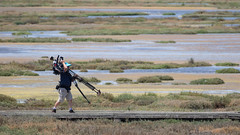 KTVU Cameraman (tourtrophy) Tags: alviso wetlands donedwardsanfranciscobaynationalwildliferefuge marshlands marsh canon canoneos7dmark2 canonef100400mmf4556lisiiusm
