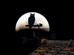ombrechinoisesureclipsedelune (pierre.pruvot2) Tags: gimp girouette wissant france nuit lune pasdecalais