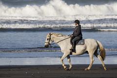 Morning Stroll (fantommst) Tags: lisaridings fantommst beach morning nz newzealand franklin county karioitahi auckland west coast ocean tasman sea waves surf black sand horse excersise ride riding summer