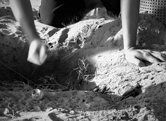 a helping hand (SM Tham) Tags: asia southeastasia malaysia pahang cherating chendor rimbundahan turtlesanctuary beach sand hole baby turtles hatchlings digging person hands eggshell blackandwhite monochrome nature