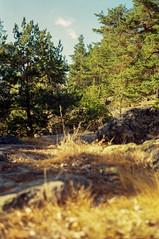 Grinda, Stockholm Archipelago (Davenant's Nose) Tags: stockholm archipeligo kodakmedalistii ektar medalistii