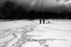 ** (donvucl) Tags: london winter snow beastfromtheeast clissoldpark shadows sky landscape bw blackandwhite composition bwcomposition nikond7000 donvucl sunlight trees figures dogs