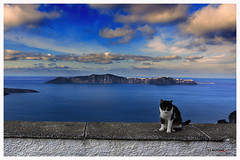 Santorini´s cat (bit ramone) Tags: santorini grecia grece gato cat travel viajes bitramone mediterráneo mar sea isla island volcan volcano