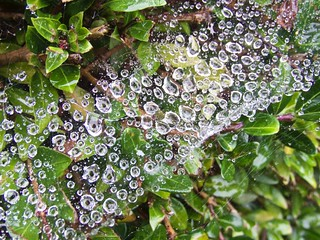 1869 Raindrop jewels