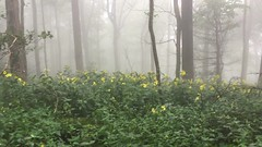 Beautiful morning in the Mountains (ninjab12000) Tags: foggy forest wildflowers hiking northgeorgia mountains appalachiantrail