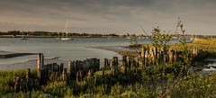 Essex South Fambridge (daveknight1946) Tags: essex southfambridge yachts river rivercrouch lowtide woodpiles greatphotographers